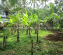agricultural farm land for sale in neyyattinkara trivandrum