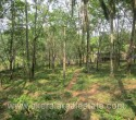 1 Acre Rubber Plantation for Sale at Parippally Keralaf (1)