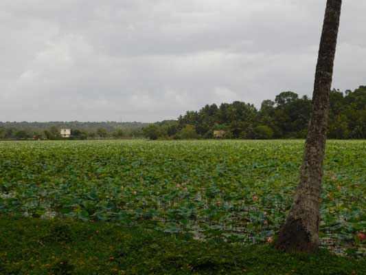 20 Cents Water Road Frontage Lake view Residential Plot For Sale at Koliyoor